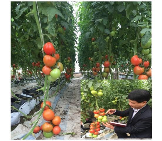 Bộ môn Cây thực phẩm và Nông nghiệp công nghệ cao