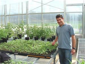SINGLE GENE DRAMATICALLY BOOSTS YIELD, SWEETNESS IN TOMATO HYBRIDS