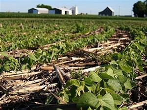 NO-TILL AGRICULTURE MAY NOT BRING HOPED-FOR BOOST IN GLOBAL CROP YIELDS, STUDY FINDS