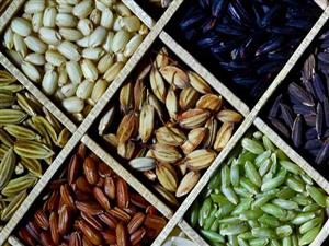 3,000 RICE GENOME SEQUENCES MADE PUBLICLY AVAILABLE ON WORLD HUNGER DAY