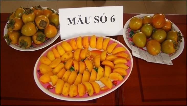 BAC KAN SEEDLESS PERSIMMON