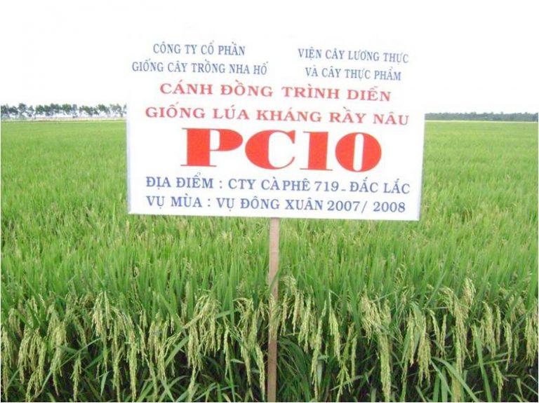 RICE VARIETY PC10